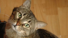 Katze Licky